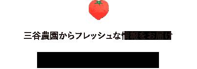 トマト季節便